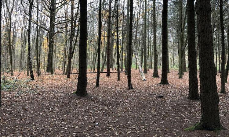 En-dessous, la forêt : Feda Wardak et la puissance de la forêt