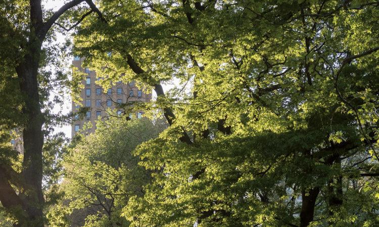 La ville-forêt – Vers une nouvelle culture urbaine