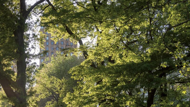La ville-forêt - Vers une nouvelle culture urbaine