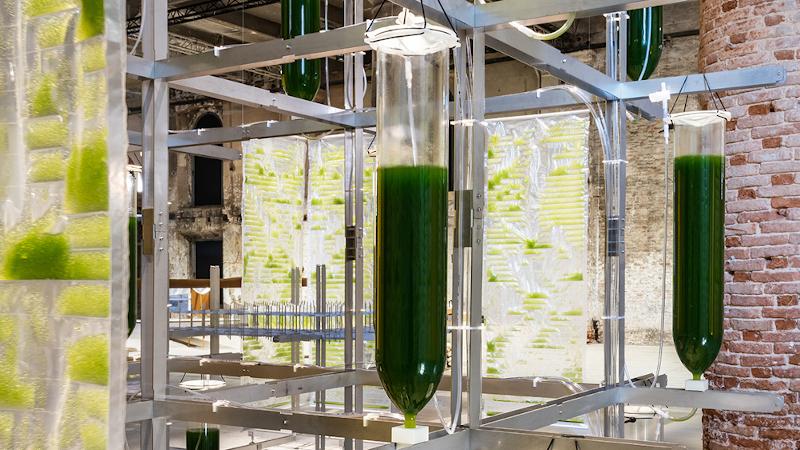 BIT.BIO.BOT : une habitation biotechnologique conçue par ecoLogicStudio