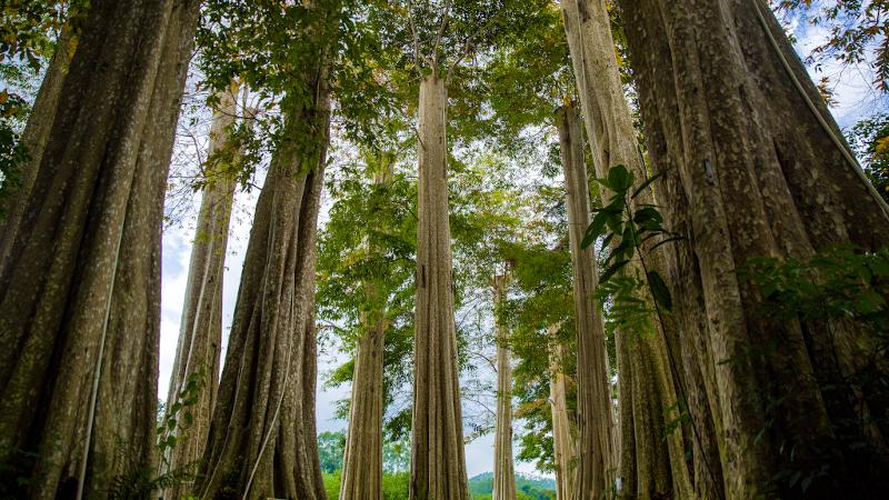 Living in the leaves, parmi les arbres millénaires de Huizhou, par Elizabeth de Portzamparc