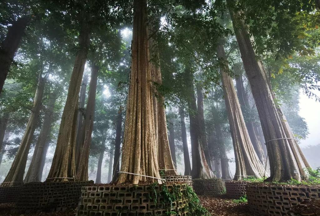 Living in the leaves Huizhou