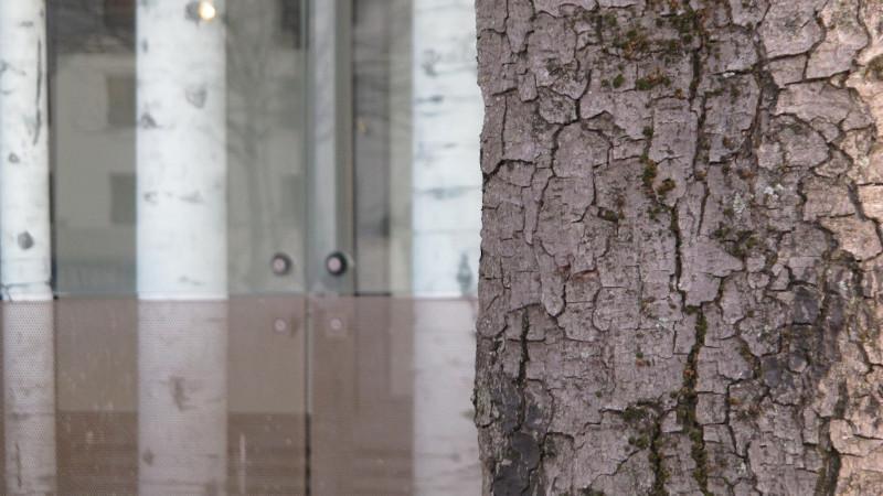 Drôle de forêt plantée par Giroux et Barthèye dans un immeuble à Paris